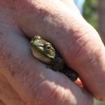 Photo d'une grenouille par Nathalie Dansereau