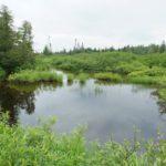 Photo Milieu humide_St-Hubert par Jean Albert, Agence régionale de mise en valeur des forêts privées du Bas-Saint-Laurent