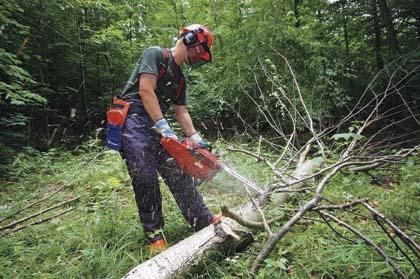 S curit au travail f d ration des producteurs - Coupe de bois de chauffage sur pied a vendre ...