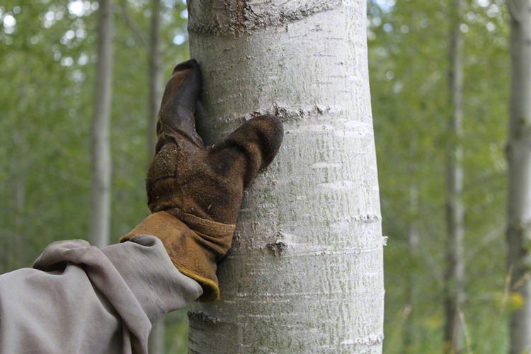 Un patrimoine forestier