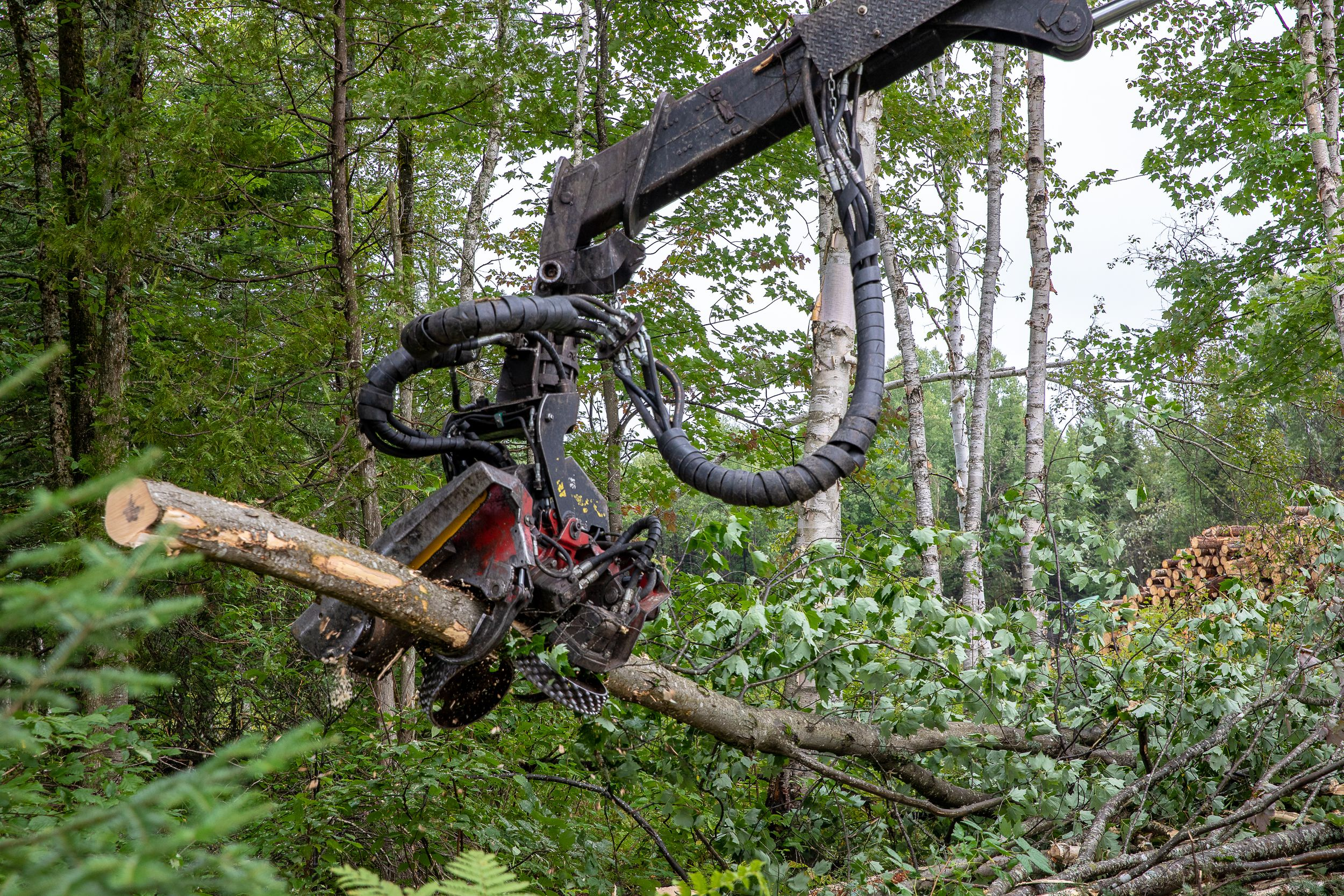 entrepreneurs forestiers :